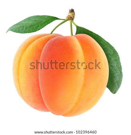 Two fresh apricots isolated on white - stock photo