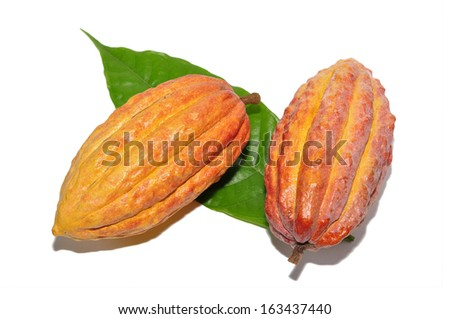 Two fresh cacao pods isolated on a white background - stock photo