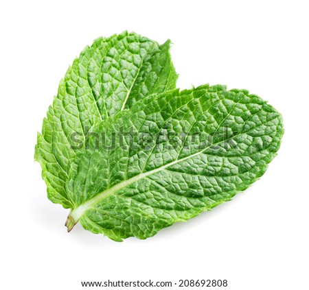 Two fresh mint leaves isolated on white background. Studio macro - stock photo