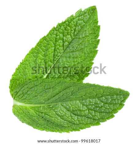 Two fresh mint leaves isolated on white background. Studio macro