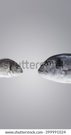 Two fresh sea breams, wild and river, big and small, in front of each other ready to fight and debate. One fish scary other