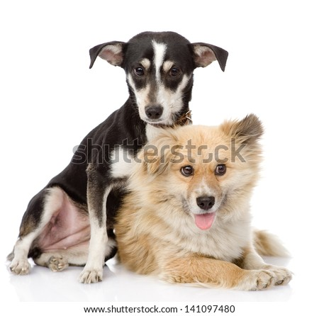 Two friendly dogs. isolated on white background - stock photo