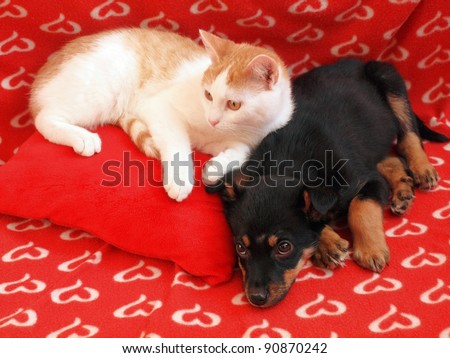 Two friends dog and cat in the red home. - stock photo