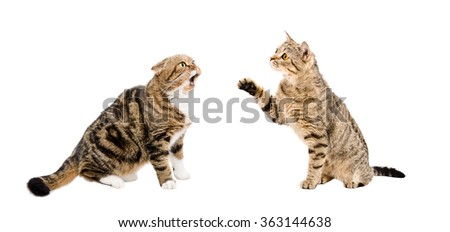 Two funny cats sitting together isolated on white background - stock photo