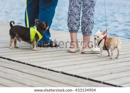Two Funny dogs are enjoing walk against water background and legs of their owners. - stock photo