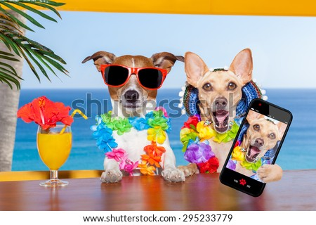Two Funny Drunk Dogs With A Summer Cocktail While Taking Selfie Smartphone