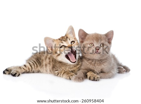 Two funny kittens lying together. isolated on white background - stock photo