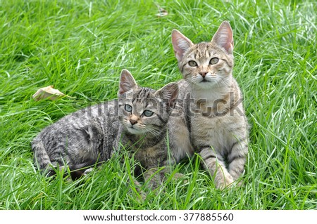 Two funny kittens sitting in the grass, spring - stock photo