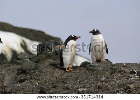 Two Gentoo penguins on rocky peak with sky in background, Antarctic peninsula - stock photo