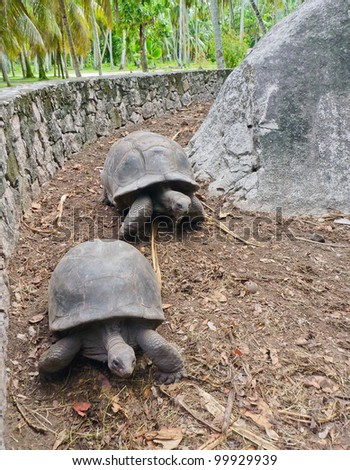 Two Giant Running Turtles on Seychelles, Indian Ocean, Africa