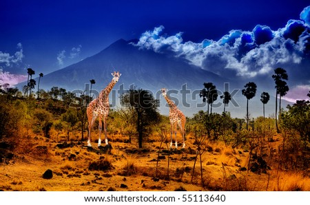 Two giraffe in savannah on background of mountains - stock photo