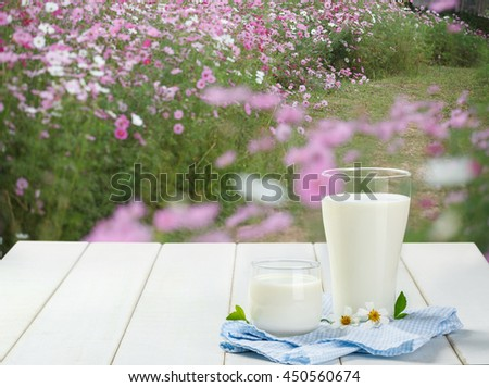 Two glass of milk with Napery on a white wooden table on flower garden background, tasty, nutritious and healthy dairy 