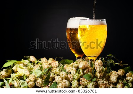 Two glasses of beer flowing with hop heap over black