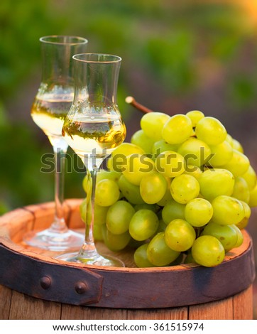 Two glasses white wine and grapes on the background of green grape leaves