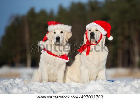 two golden retriever dogs in santa hats sitting outdoors in winter
