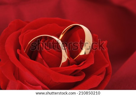 Two golden rings in red rose on red satin background - stock photo