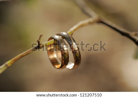 two golden wedding rings hanging on branch