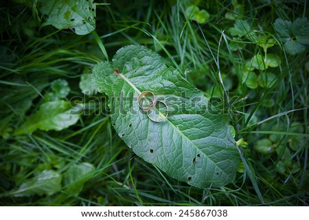 Two Golden wedding rings lie on leaves green plant - stock photo