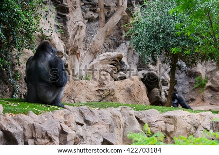 Two Gorillas