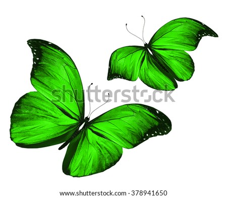Two green butterflies, isolated on white background