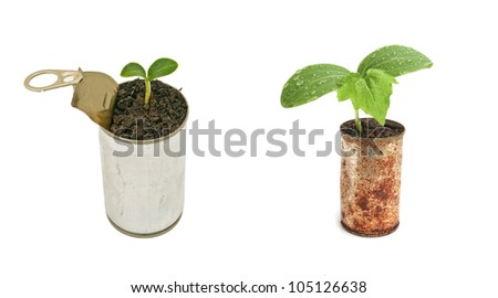 Two green plant in can isolated on white background