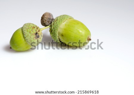 Two green unripe acorns isolated on white background. - stock photo