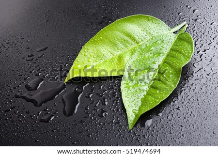 Two green wet leafs on a black