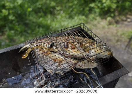 Two grilled carp on bbq fireplace, roasted