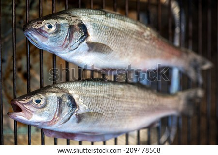 Two grilled whole fresh bass cooking on a metal grill viewed from overhead for a tasty seafood dinner