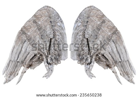 Two grunge wooden wings isolated on white background - stock photo