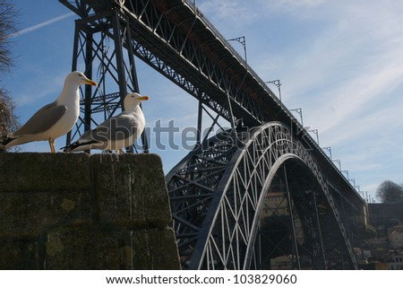 two gulls near the bridge of Luis I over Douro river, Porto, Portugal. It was designed by Gustaf Eiffel. Portugal - stock photo