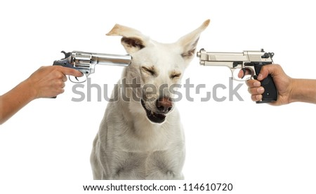 Two guns pointed at Crossbreed dog against white background