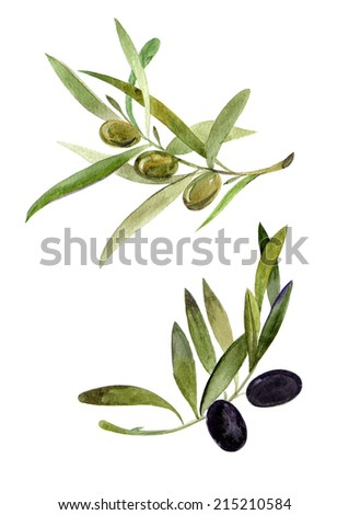 Two hand drawn olive branches