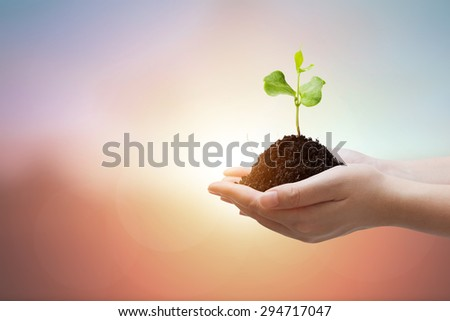 Two Hand holding young plant on Abstract pastel forest blurred background