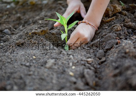 two hands children planting a tree