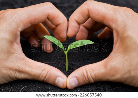 two hands forming a heart shape around a young green plant / planting tree - stock photo