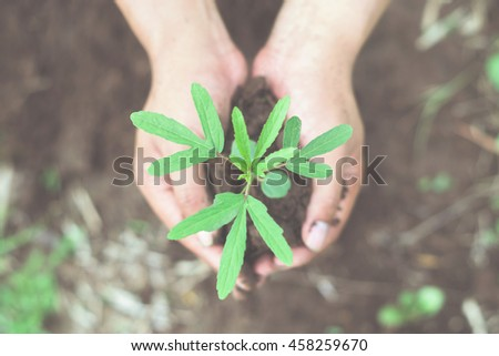 Two hands holding a little green tree plant with soil,Green tree growing on hand, Ecology concept - stock photo