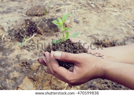 Two hands holding a little green tree plant with soil,Green tree growing on hand, Ecology concept