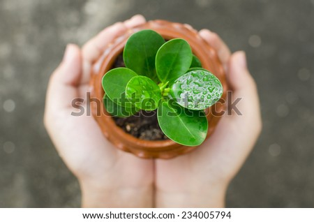 two hands holding and caring a young green plant - stock photo