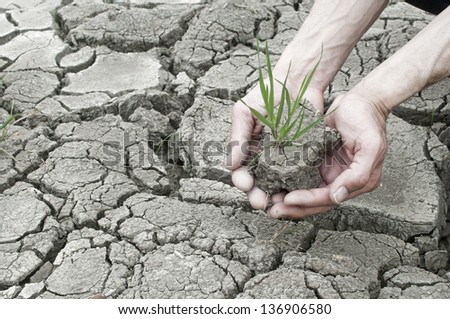 Two hands holding green grass plant over cracked clay land - stock photo