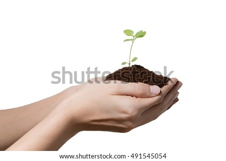 Two hands holding small plant and soil on white background.