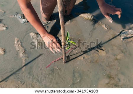 Two hands of volunteer taking care and plant a young green mangrove tree at reserve site  / save the world in Phuket, Thailand