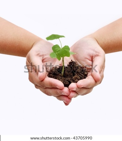 Two hands with a plant and dirt - stock photo