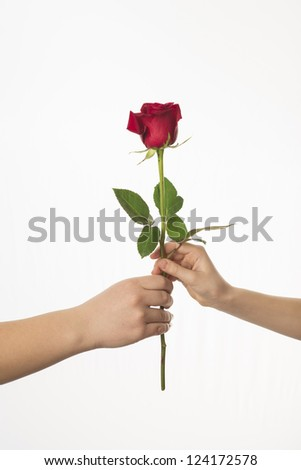 two hands with a rose - stock photo