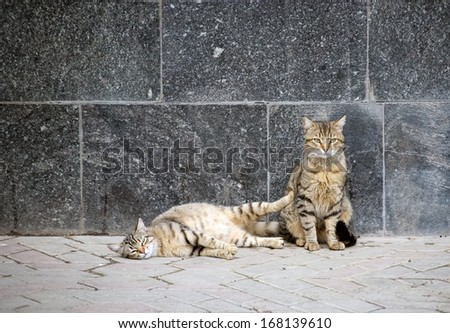 Two happy cats - stock photo