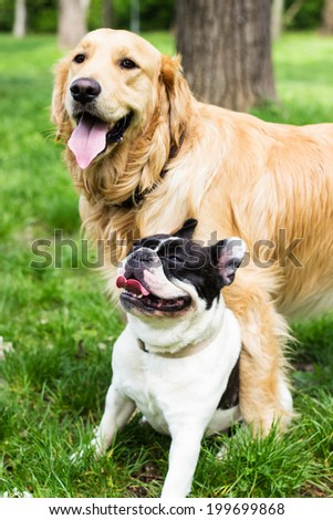Two happy dogs in the park - stock photo
