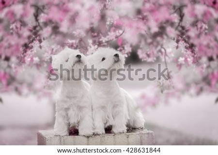 Two Happy Dogs Posing On Park Bench - stock photo