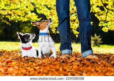 two happy dogs with owner sitting on grass in the park, looking up - stock photo