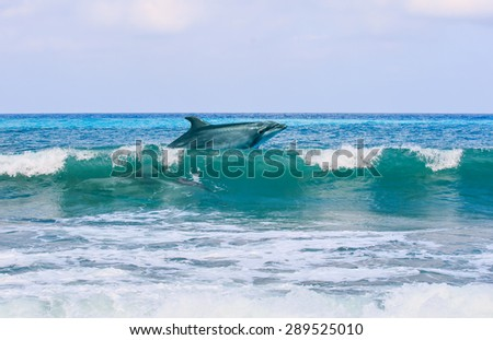 Two happy playful dolphins leaping from sea breaking surfing wave to foam - stock photo