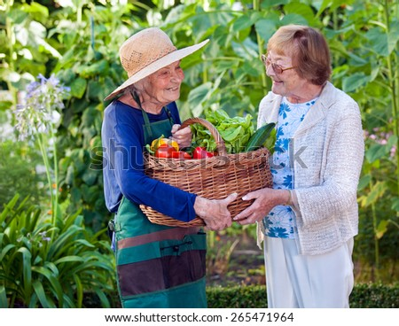 Two Happy Senior Women Holding a Basket of Healthy Fresh Vegetables Together at the Garden. - stock photo